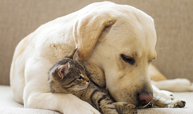 Νέο σχέδιο νόμου για τα ζώα συντροφιάς