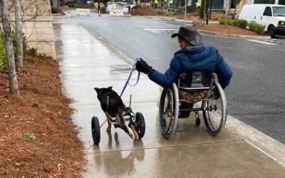 ΑμεΑ υιοθέτησε σκύλο σε αναπηρικό αμαξίδιο
