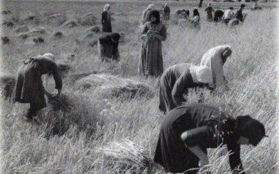 Ημέρα Ελληνίδας Αγρότισσας
